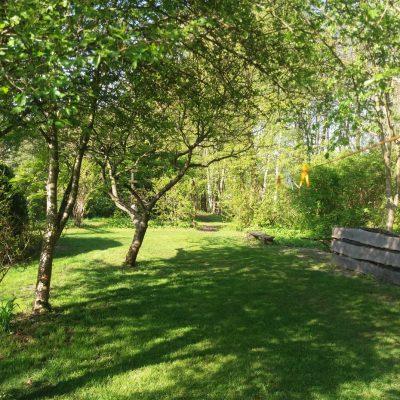 ogród - brzózki