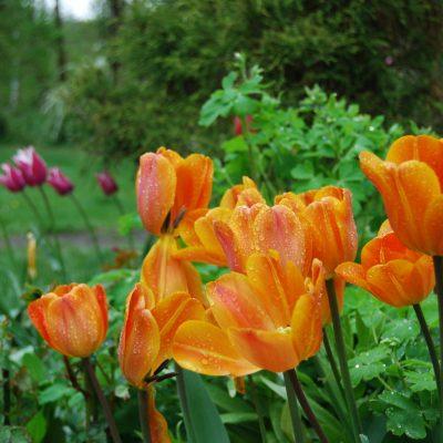 wiosna w Domu pod Lipą, Silna Nowa