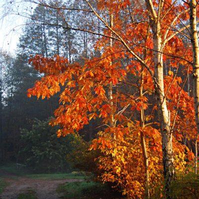 jesień, fot. Sylwia