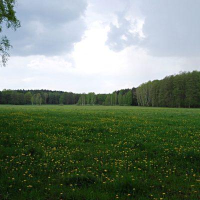 łąka Pszczewski Park Krajobrazowy