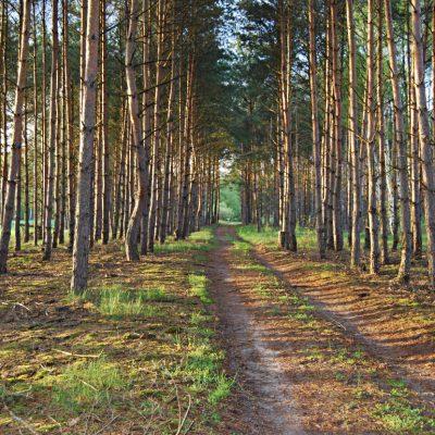 leśne drogi Silna Nowa