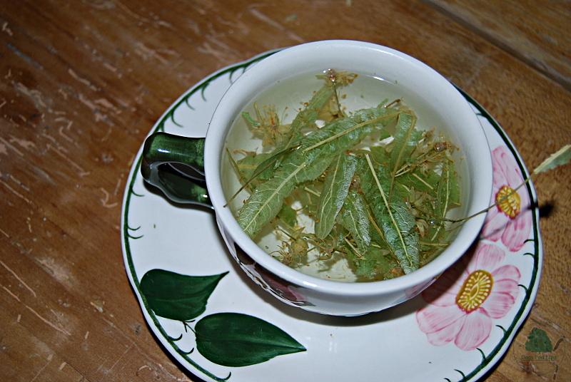 Lipa filiżanka herbaty lipowej
