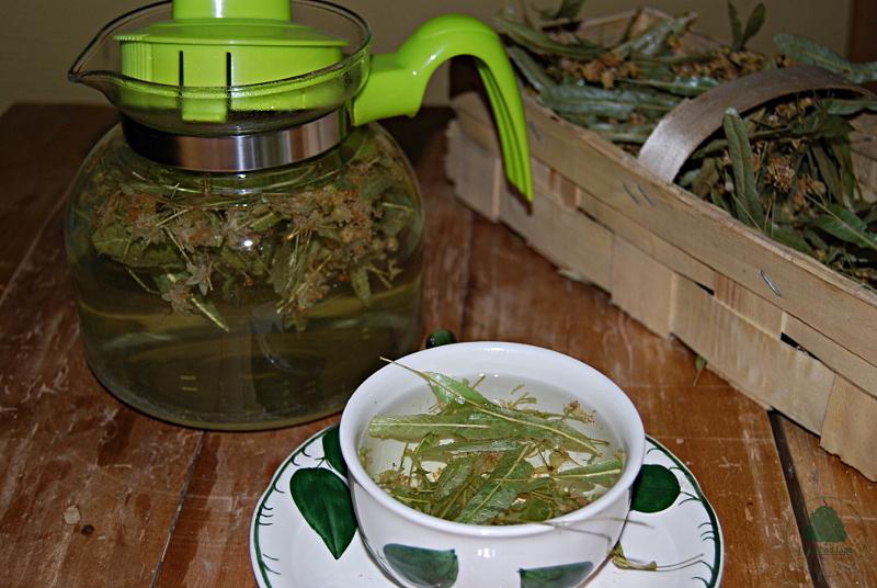 Lipa herbata lipowa Dom pod Lipą