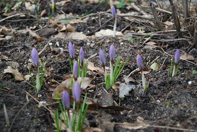 idzie wiosna