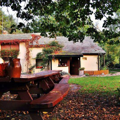 widok spod lipy - malownicza jesień, fot. Ewa Profaska WNofPh