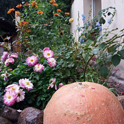 Dynia i kwiaty, fot. EBK
