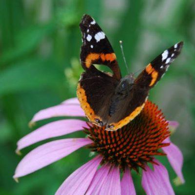 motyl w Sylwii obiektywie