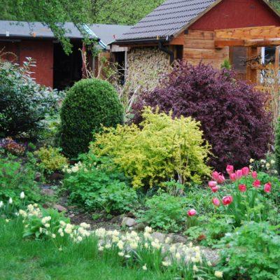 ogród z widokiem na domek