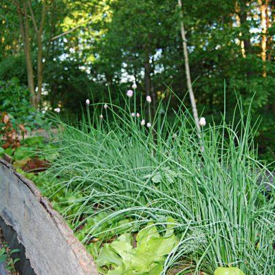 ogrodek ziołowo warzywny