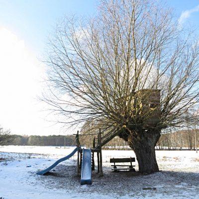 wierzba zimową porą, fot. EBK