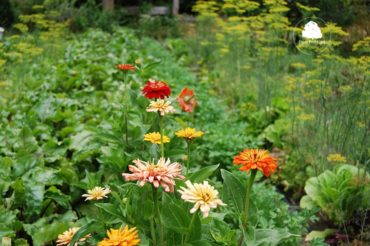 Lato w ogrodzie